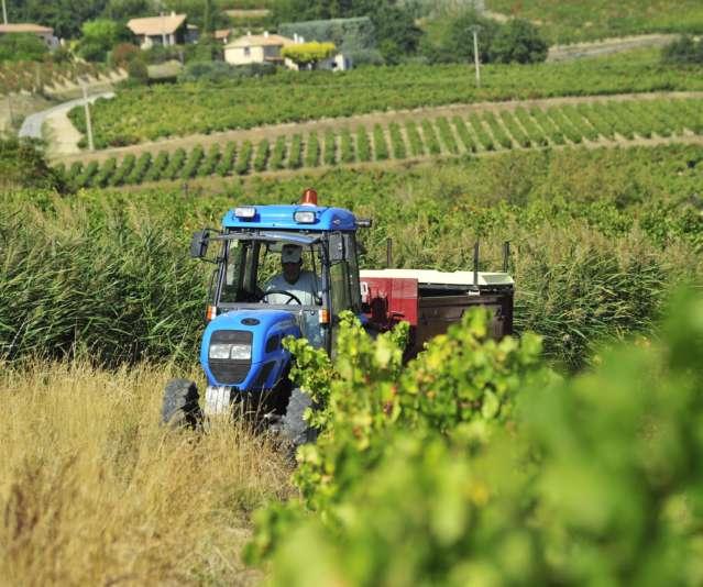 Wanneer begint de druivenpluk in Rasteau ?