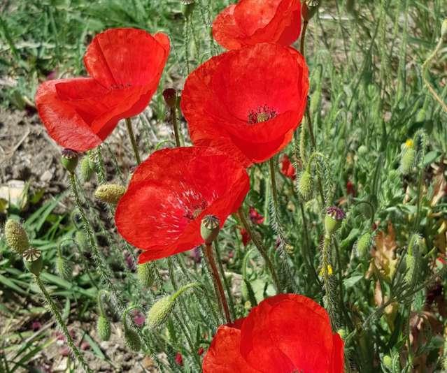 """""""Fleur"""" .. een nieuwe rode Rasteau wijn in het diVines assortiment"""