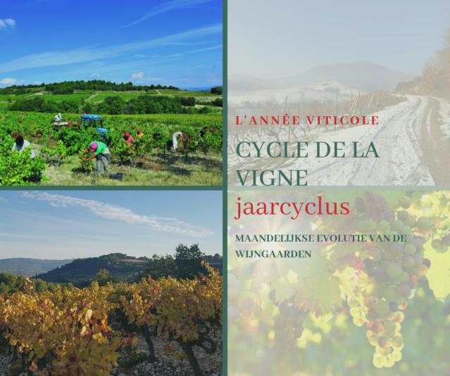 """Blog """"L'année viticole"""""""